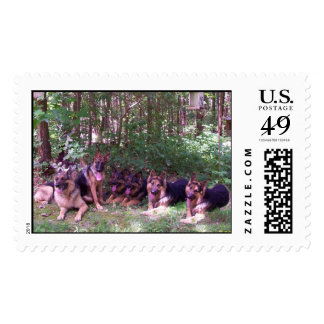 Bunch of Dogs Postage Stamp