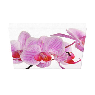 Bunch Of Elegant Pink Orchids Canvas Print