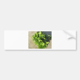 Bunch of fresh herbs bumper sticker