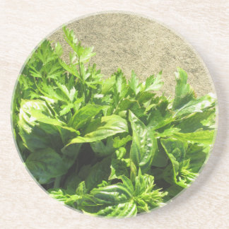 Bunch of fresh herbs drink coaster