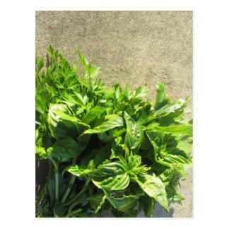 Bunch of fresh herbs postcard