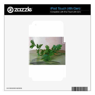 Bunch of fresh parsley on the table iPod touch 4G skins
