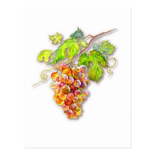 Bunch of grapes postcard