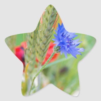 Bunch of of red poppies, cornflowers and ears star sticker