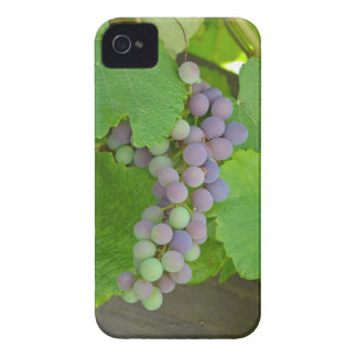 Bunch of purple grapes iPhone 4 Case-Mate cases