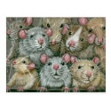 Bunch of Rats at Rattie Reunion Postcard