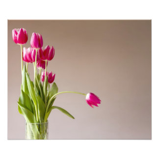 Bunch of red and white tulips on beige background photographic print