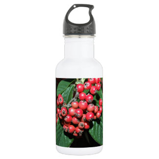 Bunch of ripen red berries stainless steel water bottle
