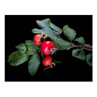 bunch of rose hip with berry postcard