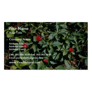 Bunchberry (Cornus Canadensis) flowers Business Card Templates