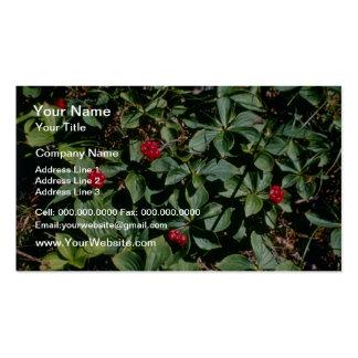 Bunchberry (Cornus Canadensis) flowers Business Card Template
