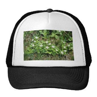 Bunchberry (Cornus Canadensis) flowers Hat