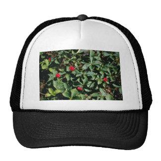 Bunchberry (Cornus Canadensis) flowers Trucker Hats