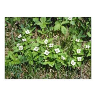 Bunchberry (Cornus Canadensis) flowers Custom Announcement