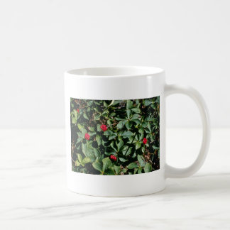 Bunchberry (Cornus Canadensis) flowers Mug