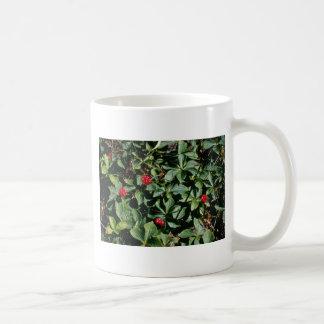 Bunchberry (Cornus Canadensis) flowers Coffee Mug