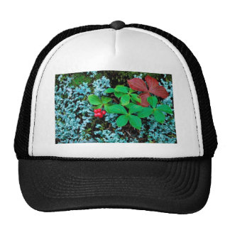 Bunchberry Hats