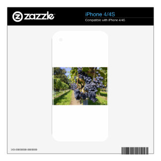 Bunches of blue grapes with path skin for iPhone 4S