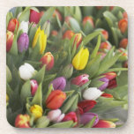 Bunches of colorful tulips coasters