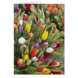 Bunches of colorful tulips greeting card
