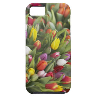 Bunches of colorful tulips iPhone SE/5/5s case