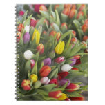 Bunches of colorful tulips notebook
