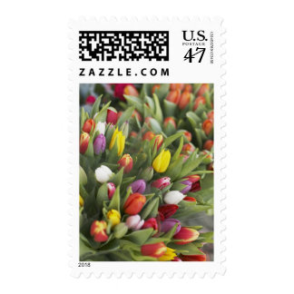 Bunches of colorful tulips postage stamp