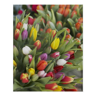 Bunches of colorful tulips poster