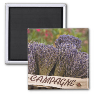 Bunches of lavender for sale, Vence, Provence, Magnet