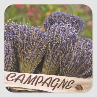 Bunches of lavender for sale, Vence, Provence, Square Sticker