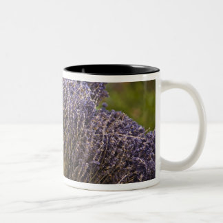 Bunches of lavender for sale, Vence, Provence, Two-Tone Coffee Mug