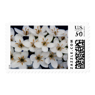 Bunches of white flowers postage