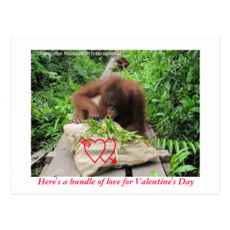 Bundle of Love for Valentine s Day Post Cards