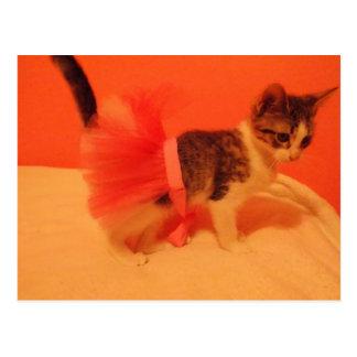 Bunni the Diva Kitten Postcard