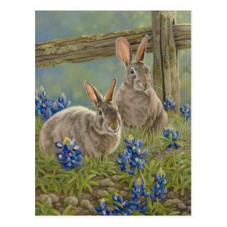 Bunnies & Bluebonnets Postcard