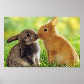 Bunnies Posters