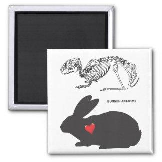 Bunny Anatomy Magnet