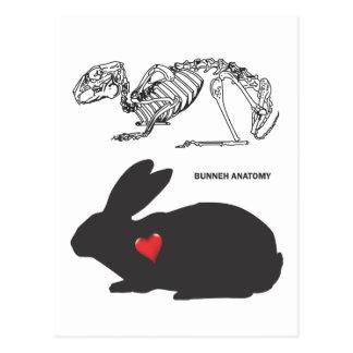 Bunny Anatomy Postcard
