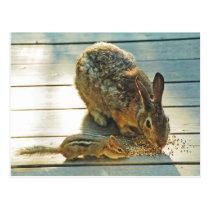 Bunny and Chipmunk Sharing Postcard