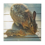 Bunny and Chipmunk Sharing Tiles