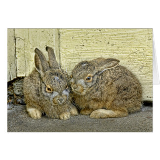 Bunny babies in the wild cards