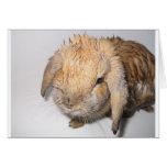 Bunny Bathtime Greeting Card