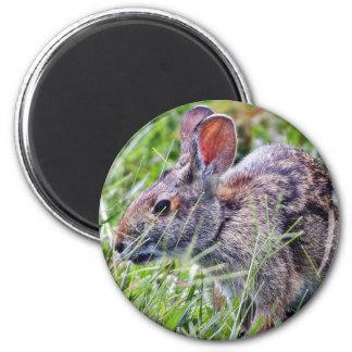 Bunny Bunnies Rabbits Refrigerator Magnets
