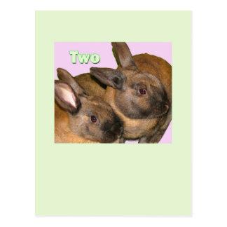 Bunny Bunnies Two Bunnies Postcard