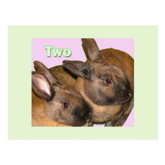 Bunny Bunnies Two Bunnies Postcards
