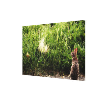 Bunny Canvas Gallery Wrapped Canvas