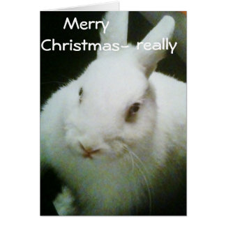 "BUNNY CELEBRATES ""CHRISTMAS"" CARD"