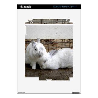 Bunny Couple iPad 3 Skin