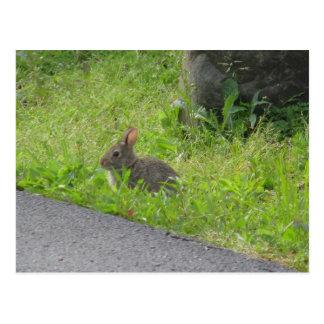 Bunny Croses Street Postcard
