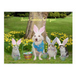 Bunny Dog with Bunny Cats Post Cards